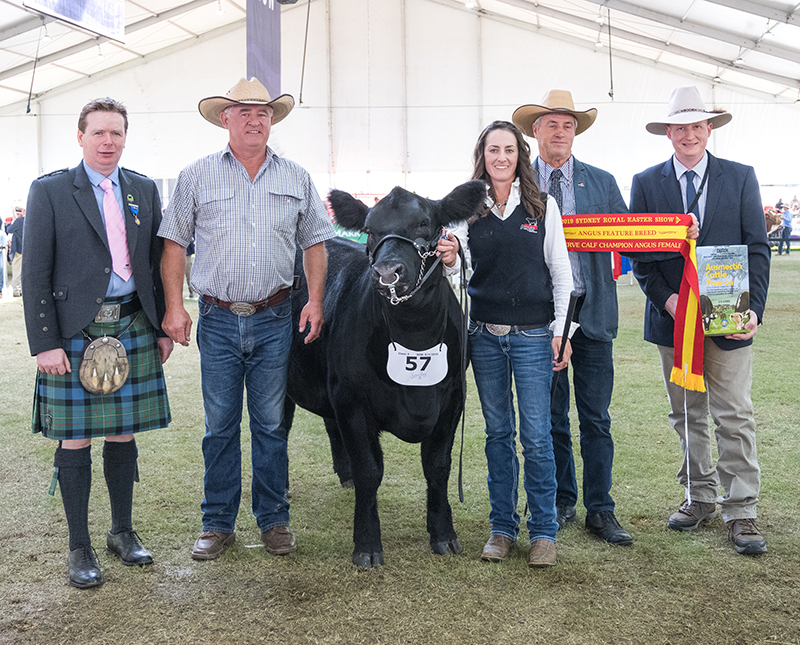 Reserve Calf Champion female presentation