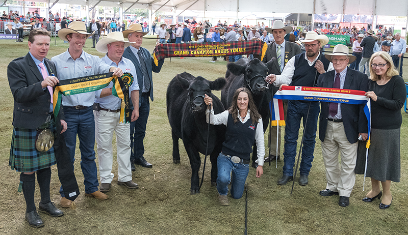 Senior & Grand Champion Angus Female