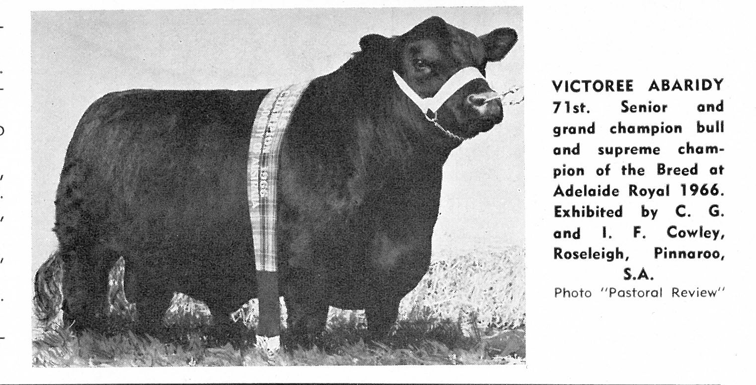 Victoree Abaridy 71st Adelaide 1966 Senior & Grand Champ Bull & Supreme Exhibit