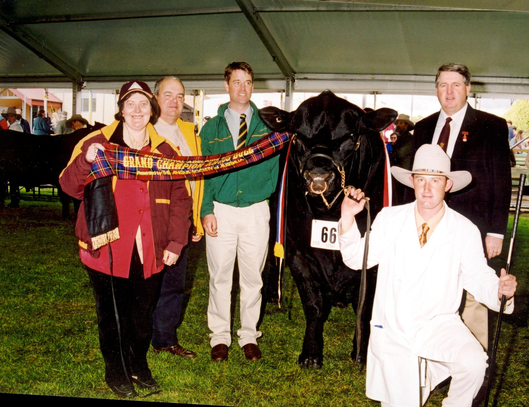 2004 Royal Adelaide Grand Champion Angus Bull