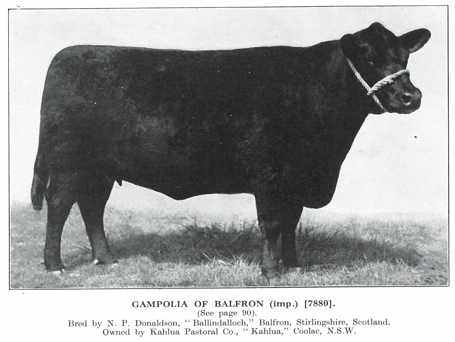 Gampolia of Balfron