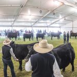 2019 Royal Adelaide Show Feature Breed Dinner – SOLD OUT