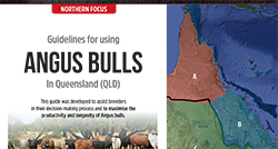 Guidelines for using Angus Bulls in Queensland