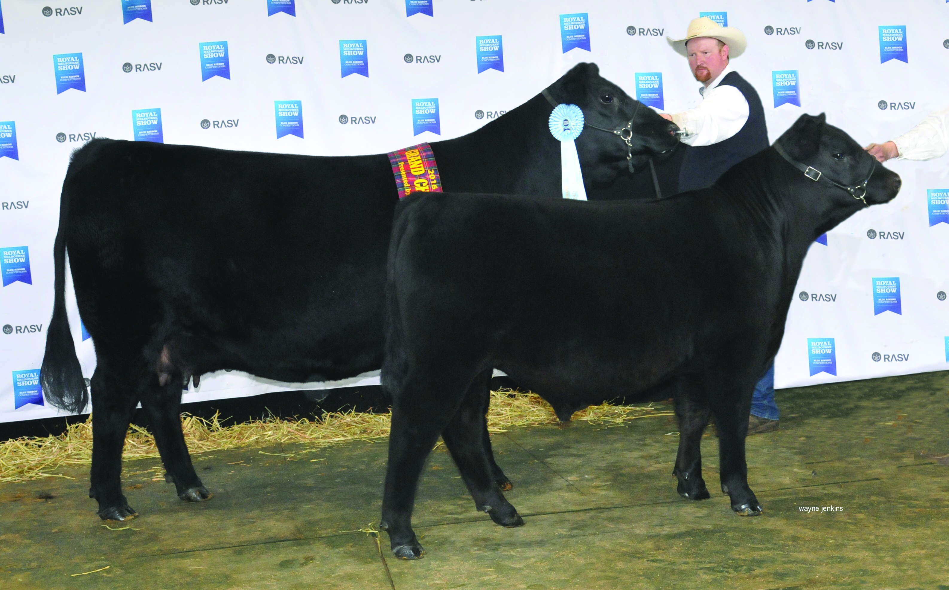 Grand Champion Angus Female 2016 Melbourne Royal