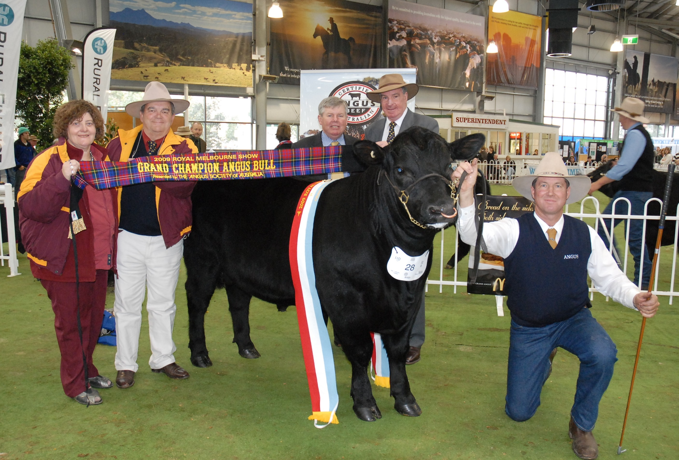 Junior and Grand Champion Angus Bull 2009 Melbourne Royal