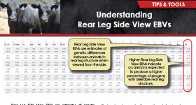 Understanding Rear Leg Side View