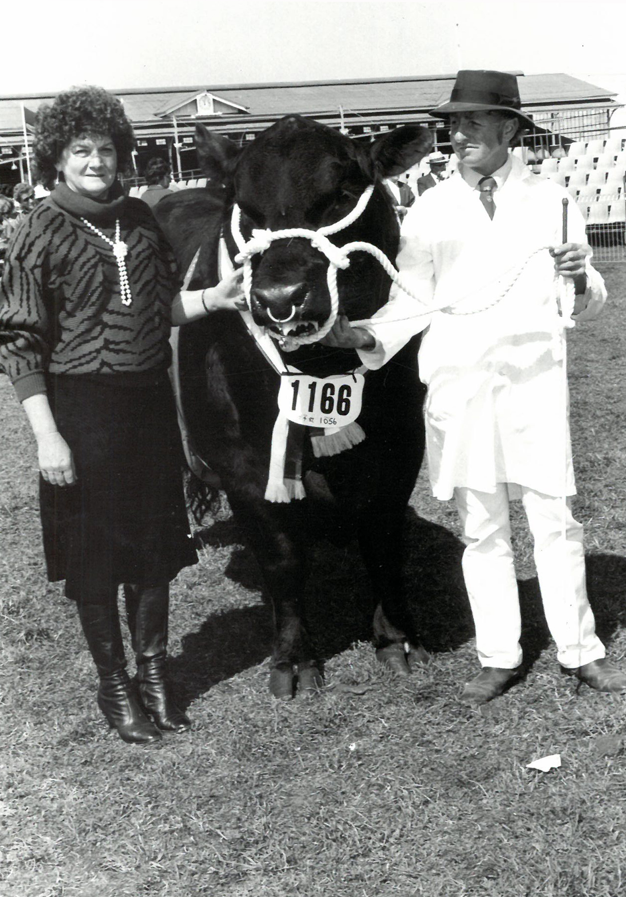 Senior and Grand Champion Angus bull 1985 Melbourne Royal Thologolong Think Twice