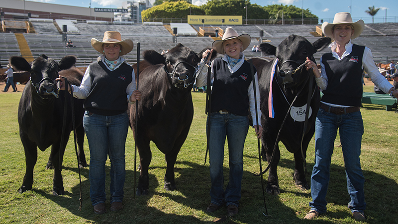 Progeny Stakes Group - Black Diamond Honky Tonk L428 exhibited by Glenrae Pastoral Co P/L