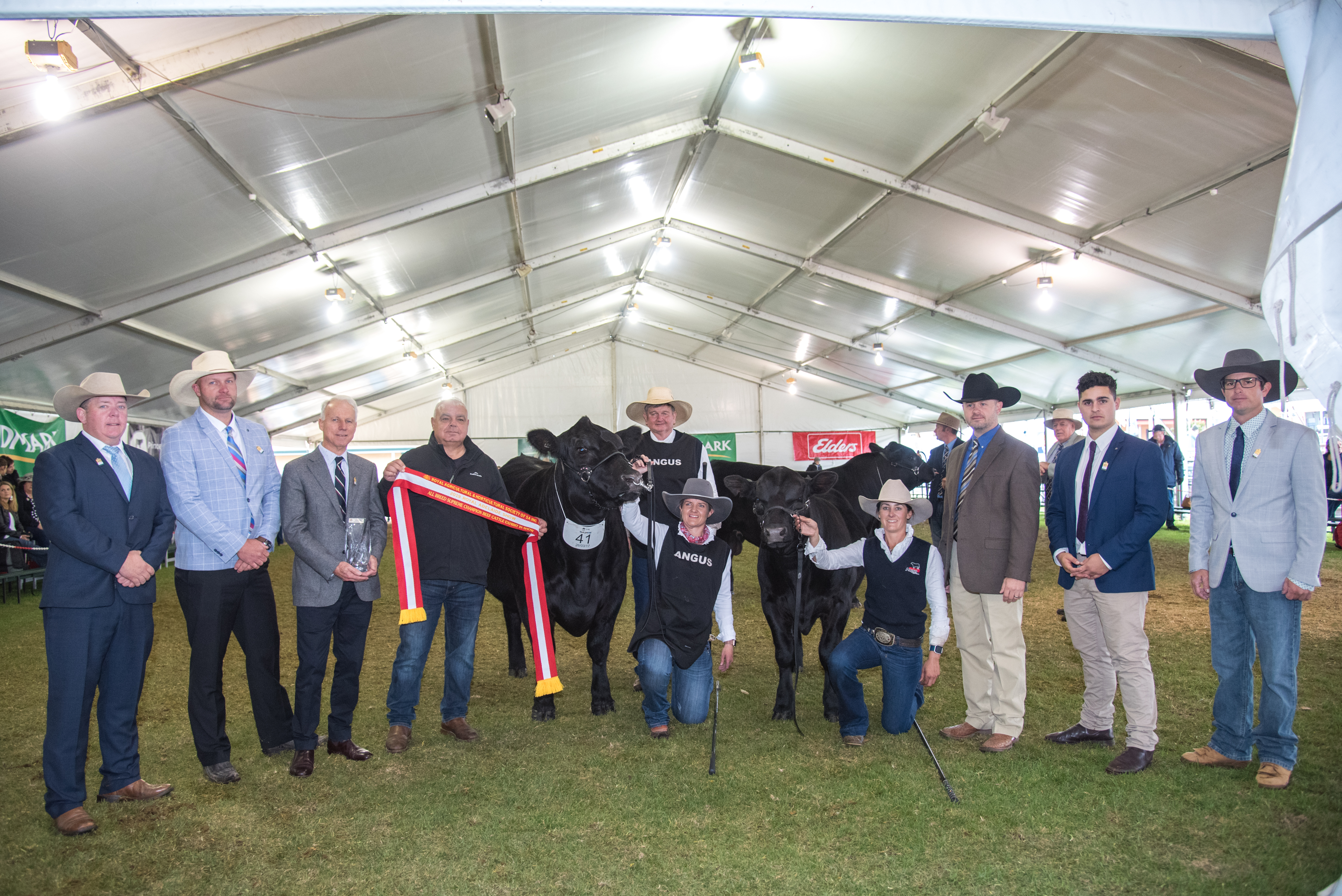 All Breed Supreme Champion Beef Cattle Exhibit in Show