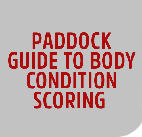 PADDOCK-GUIDE-TO-BODY-CONDITION