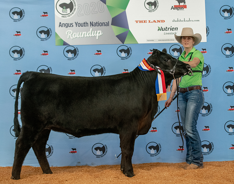 Champion Bred and Owned BOWENFELS EBONI Q1 exhibited by Chloe Gould