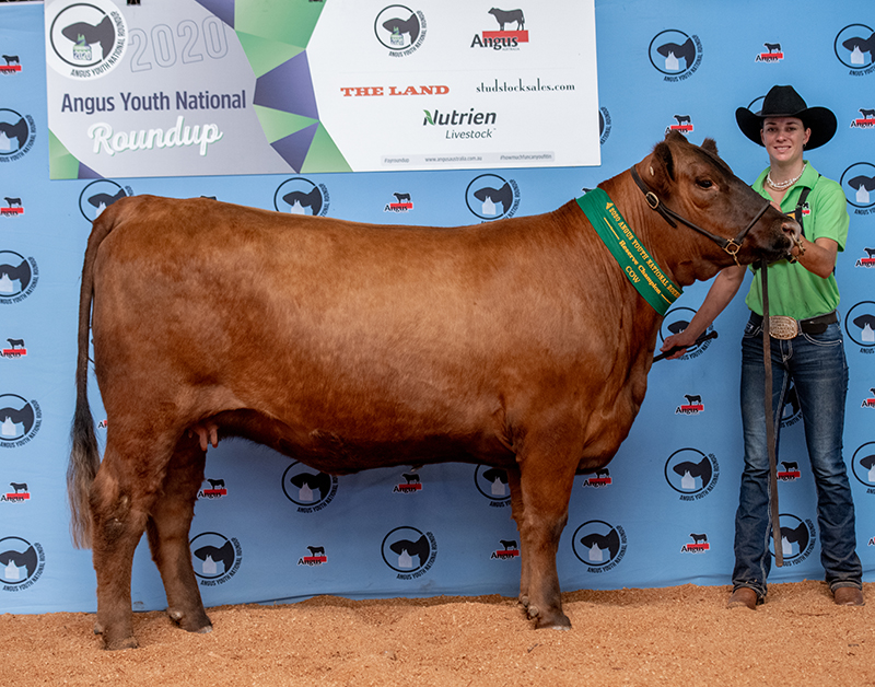 Reserve Champion Cow GOONOO RED NEWCOMBE GSJN17 exhibited by Billi Marshall