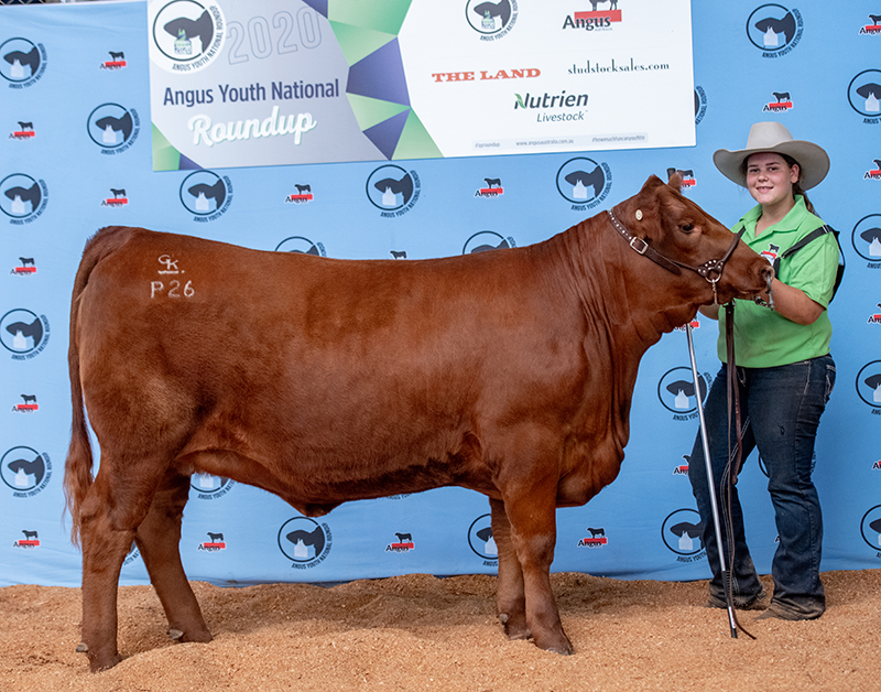 Supreme Champion Exhibit, Champion Junior Heifer & Reserve Champion Bred and Owned GK RED 1B PLATINUM RUBA P26 exhibited by Brooke Iseppi