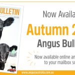 2020 Autumn Angus Bulletin