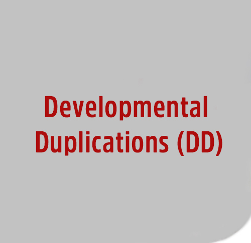 Developmental-Duplications-DD