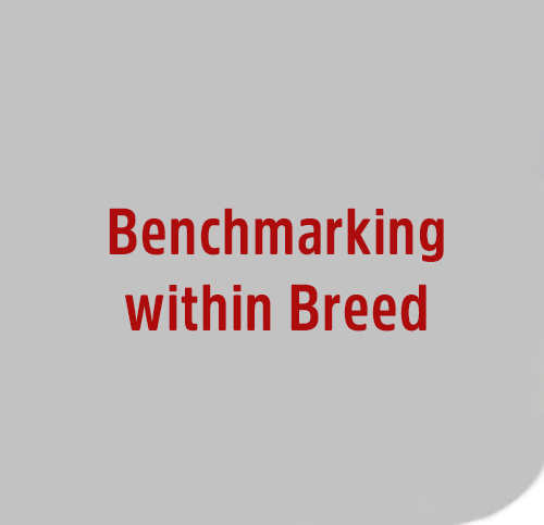 Benchmarking-within-Breed