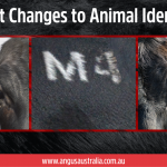 Important Changes to Animal Identification
