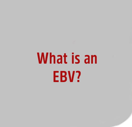 What-is-a-EBV