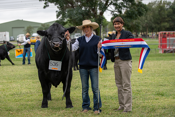 Junior Champion Bull: PC Quick Silver Q063 SV
