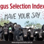 Complete the Angus Selection Indexes member feedback survey
