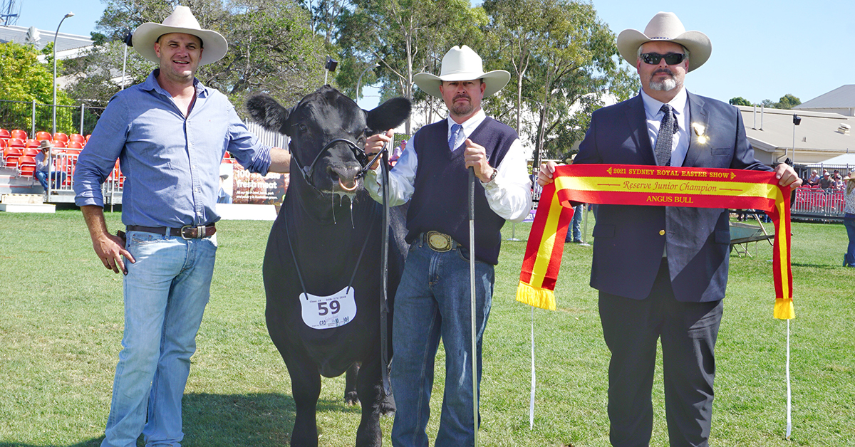 Reserve Junior Champion Bull - Yallambee Cowboy Up R1#
