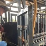 Integrating Fixed Time AI into Commercial Breeding Programs